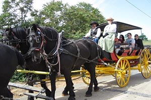 Percheron horses pulling wagon